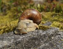 Snail on a rock Stock Photo