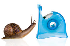 Snail romance. Garden snail in love with a blue sellotape holder Stock Photo