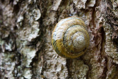 Snail with a round sink on the tree Royalty Free Stock Photography