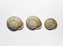 Snail Row. Three snails in a row on a white background Stock Photography