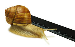 The snail and the ruler Royalty Free Stock Photography