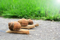 Snail run Stock Photos