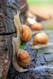 Snail run Stock Photos