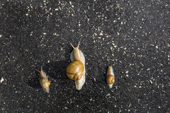 Snail run, animal funny concept fast competition Stock Photos