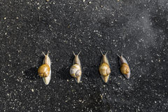 Snail run, animal funny concept Royalty Free Stock Photo