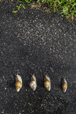 Snail run, animal funny concept, fast sport Stock Photo