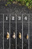 Snail run, near the Finish line, One two three  on the ground, f Royalty Free Stock Images