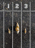 Snail run, near the Finish line, One two three  on the ground ne Stock Photography