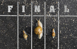Snail run, near the Finish line, Winner sign on the ground, funn Royalty Free Stock Images