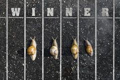 Snail run, near the Finish line, Winner sign on the ground Royalty Free Stock Images