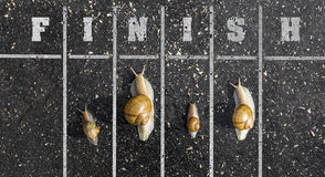 Snail run, near the Finish line, Winner sign on the ground Stock Image