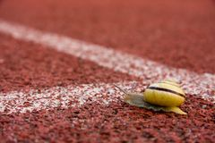 Snail on running track Stock Image