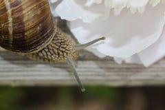 Snail's head macro Stock Photo