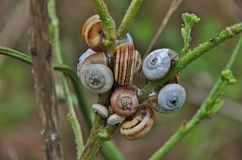 Snail& x27;s nest. Provided with a spiral shell. There are marine and terrestrial snails Stock Photos