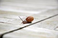 Snail's pace Stock Photos