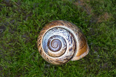 Snail's shell high quality detail Royalty Free Stock Images