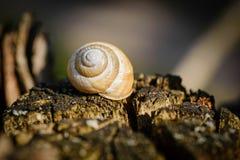 Snail`s shell on a tree Stock Photos
