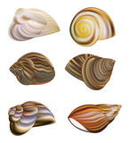 Snail's Shell vector Stock Images