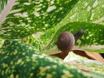 Snail& x27; s życie Fotografia Royalty Free