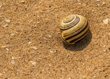 Snail in the sand Royalty Free Stock Photos