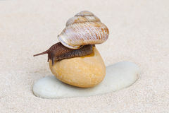 Snail on sand Royalty Free Stock Images