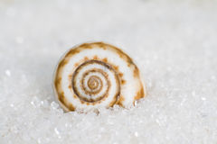 A snail on the sand Royalty Free Stock Images