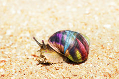 Snail on sand Royalty Free Stock Photo