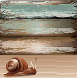 Snail on sand with wood background Stock Photo