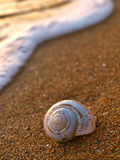 Snail on sandy beach. Marine snail on a sandy beach in the sunset at Adriatic sea (Croatia). Photographed using a long exposure Stock Photography