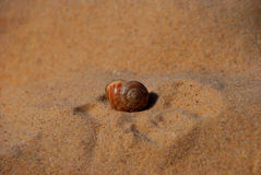 Snail on sandy beach Royalty Free Stock Photos