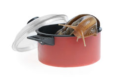 Snail in saucepan Royalty Free Stock Image