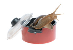 Snail in saucepan. Isolated on white background Stock Image