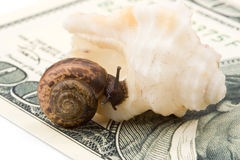 Snail, sea shell and money Royalty Free Stock Photos