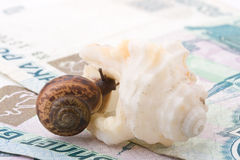 Snail, sea shell and money Stock Photo
