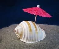 Snail Sea Shell Ubrella. A beautiful sea snail shell with unbrella Royalty Free Stock Image