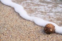 Snail on the seashore Royalty Free Stock Image