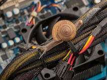 Snail on serviced personal computer concept for slowly, error, v Stock Images