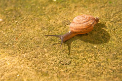 Snail and shadow Stock Photos