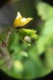 Snail on a sheet. A snail grawl on a sheet Royalty Free Stock Image