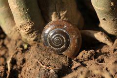 Snail shell Stock Image