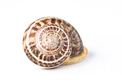 Snail shell. Isolated on white background Stock Photo