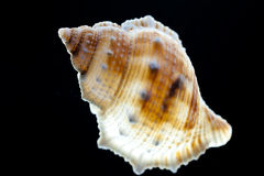 Snail shell Royalty Free Stock Photo