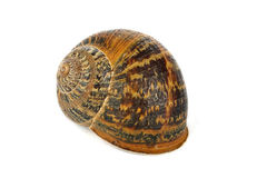 Snail shell Stock Photography