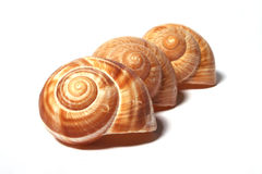 Snail shell 14. Three snail shells in order Stock Photos