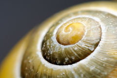 Snail shell. Extreme macro of a colorful snail shell Royalty Free Stock Photos