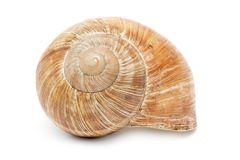 Free Snail Shell Royalty Free Stock Image - 2303206