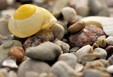 Snail shell. A snail shell on the beach Royalty Free Stock Image