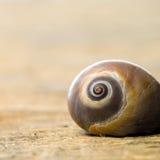 Snail shell Royalty Free Stock Photos