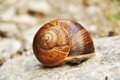 Snail. A shell of the snail Stock Photos