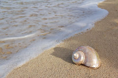 Snail Shell on the beach. Large snail shell on the beach near to the water Royalty Free Stock Photos